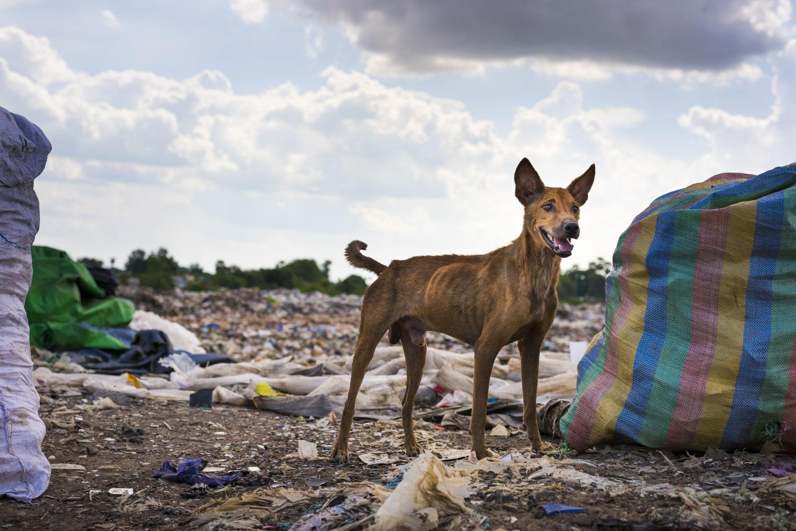 Hund auf der Mülldeponie