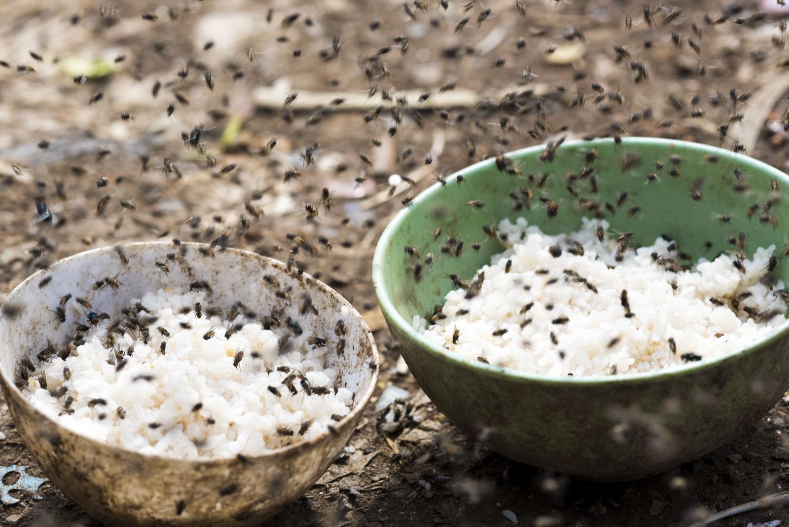 Reis für die Hunde