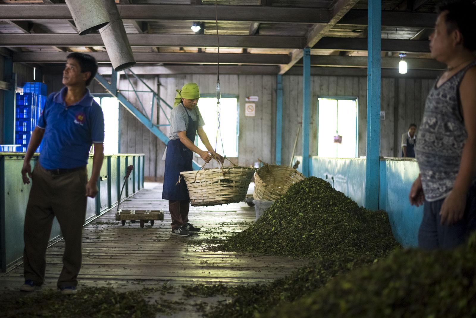 Arbeiter, Teesta Valley Tea Factory