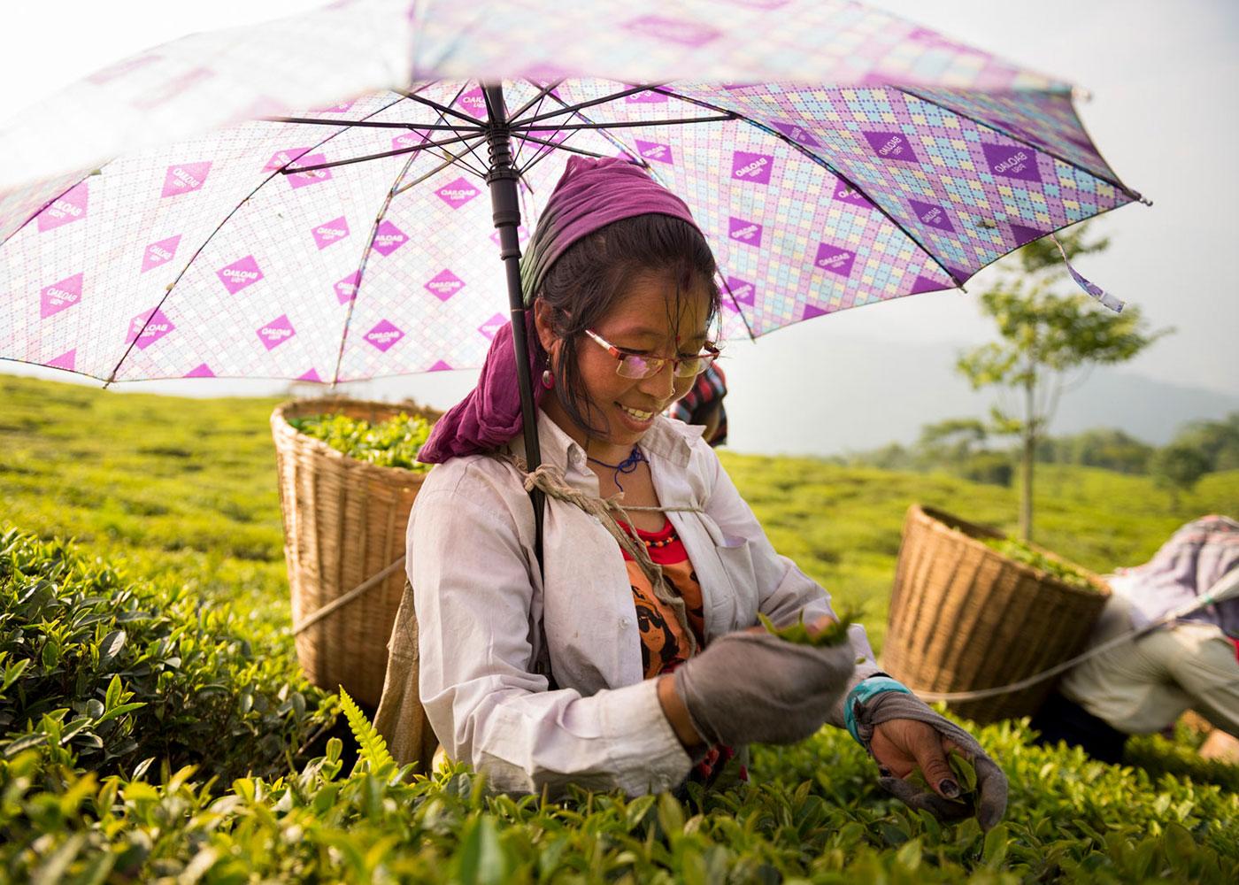 Teepflückerin in den Teegärten der Teesta Valley Tea Factory, Indien © Oliver Wolff