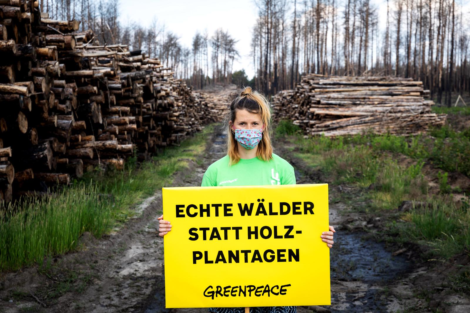 Protest für mehr Klimaschutz und bessere Waldbewirtschaftung in Brandenburg. Die Folgen der letztjährigen Dürren für die deutschen Wälder sind gravierend. 2020