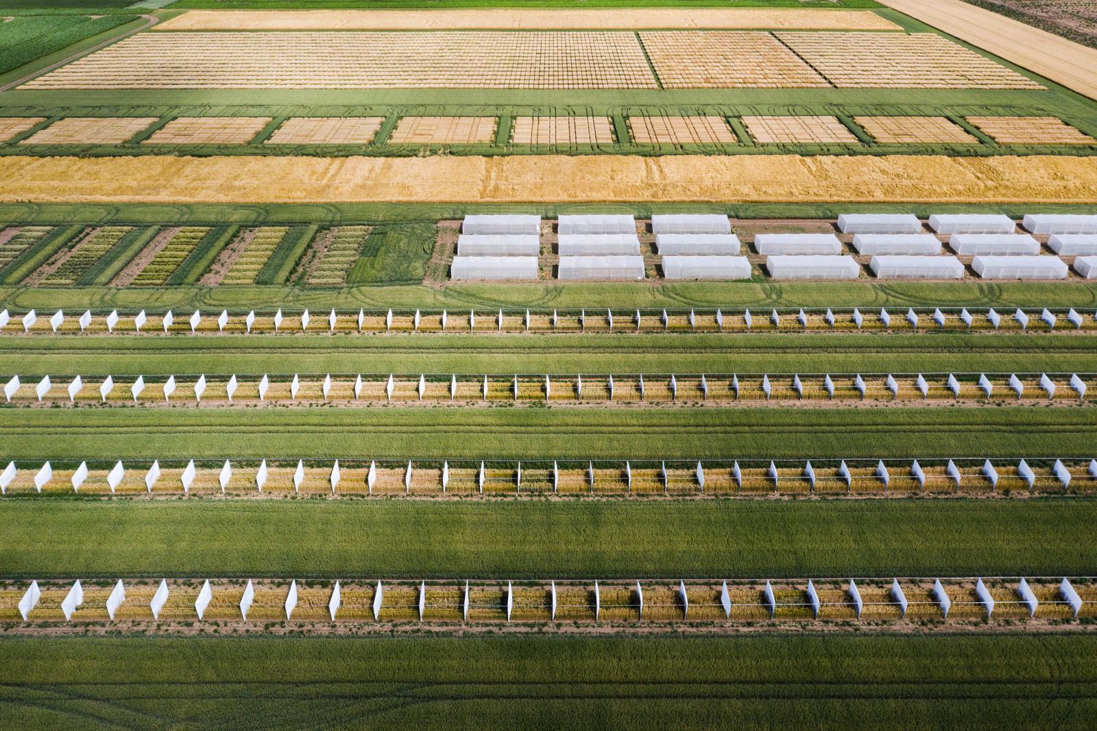 Genverändertes Saatgut, Deutschland © Kollektiv25