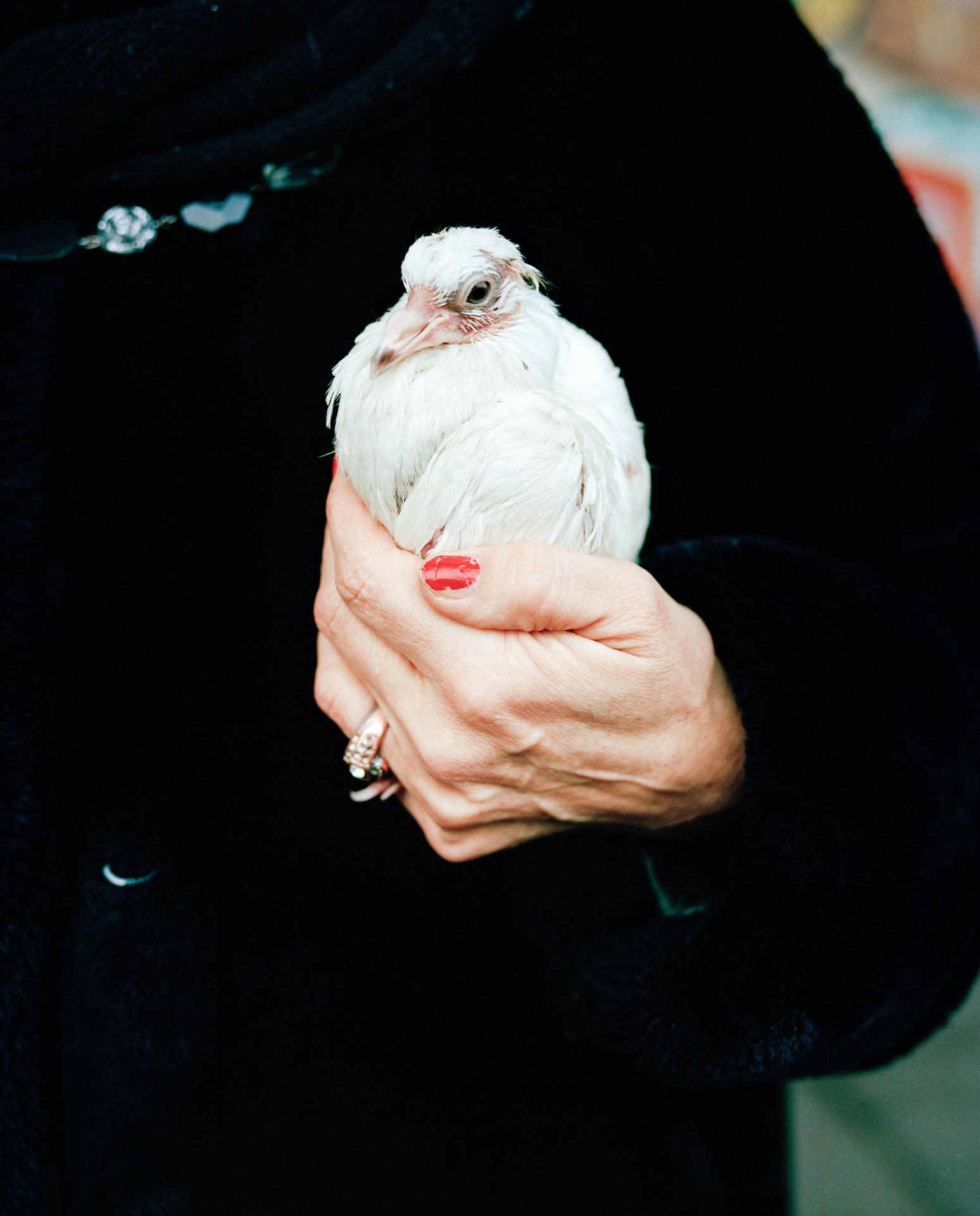 Fabian_Fiechter_HAND_WITH_A_BIRD_2012-01